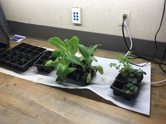 Plant growth light tests