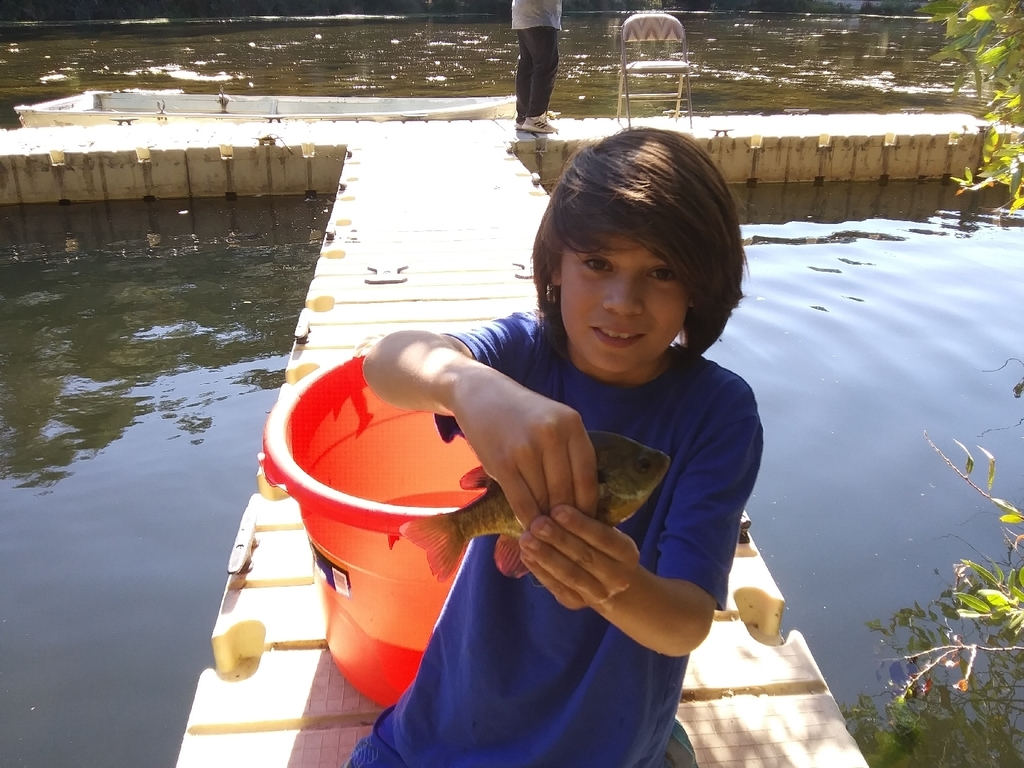 Catch & Release Bluegill