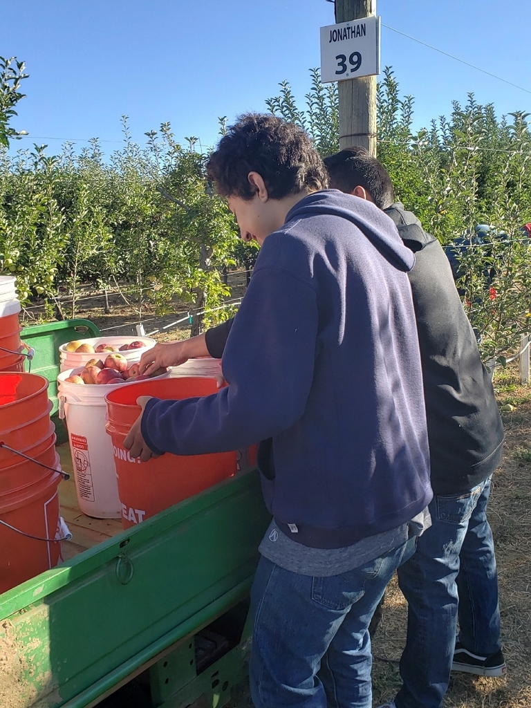 Juan R. & Josh V. loading the cart with full apple buckets