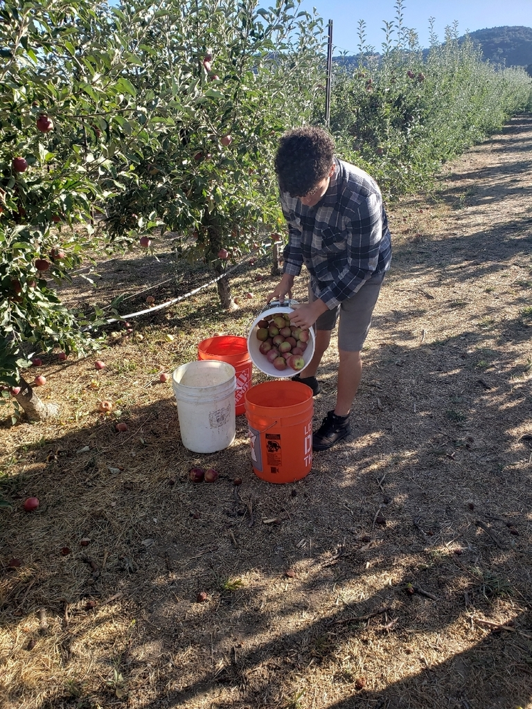 Gabriel L. filling buckets with Apples