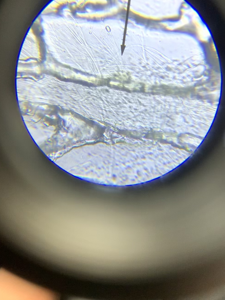 Microscopic look!