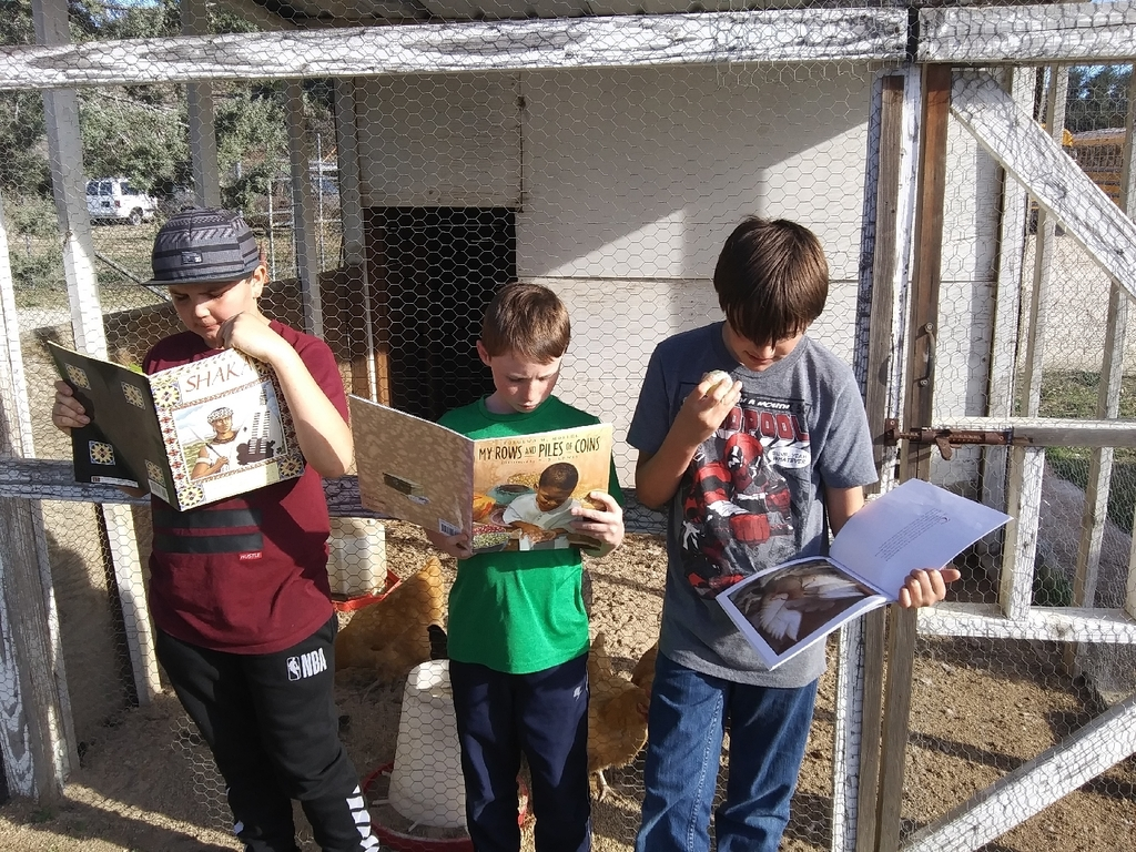 Reading to the chickens.