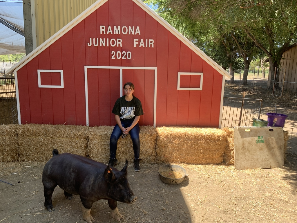Amber with pig Ralph 235lbs
